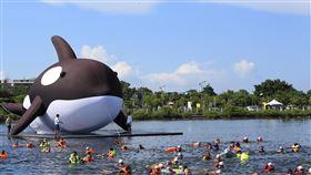 裝置藝術安平虎鯨前進台南安平號稱全球最大的虎鯨裝置藝術「安平虎鯨Orca」,11日在多人伴游下,前進安平區東興洋行前水域,預定15日公開亮相。中央社記者張榮祥台南攝 109年7月11日