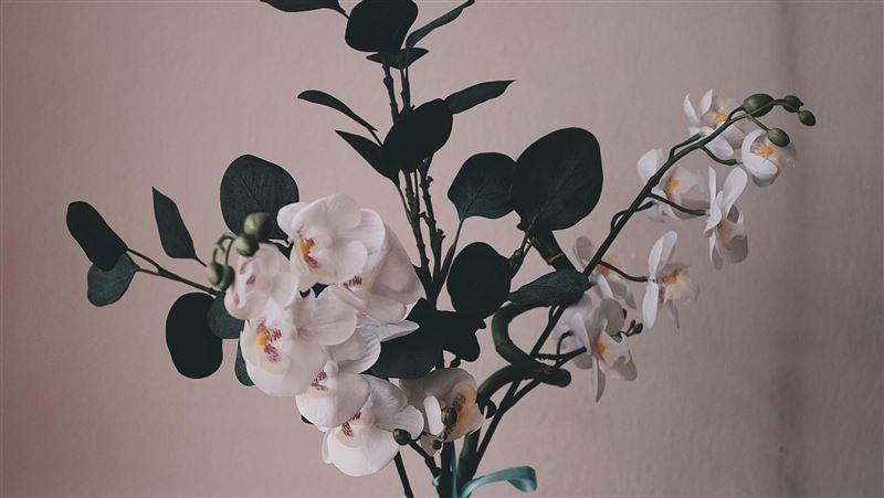 幫你發大財!命理師推5植物旺財運 桃花招良緣蘭花招人氣