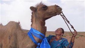 駱駝被賣8個月!「獨行100公里」回家…滿身傷痕見主人(圖/翻攝自央視新聞微博)