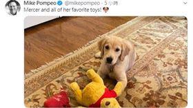 美國國務卿龐佩奧,發推特說「小熊維尼是他家狗的玩具」。(圖/翻攝自Mike Pompeo推特)