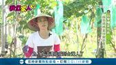 自學種菜技術 越南媽媽當快樂新農民