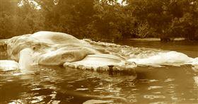 印尼,神秘海怪,擱淺,屍體,魷魚,巨型,