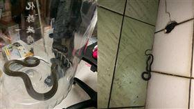 眼鏡蛇,臭青母,彰化,洗澡,排水孔(圖/翻攝自爆廢公社)