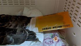 三倍券塑膠套可救猛禽!急募200片7小時達標「尾巴收到滿滿愛心」(圖/翻攝自台灣猛禽研究會)