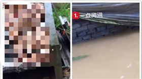 中國,河南,淹水,養雞場,雞,損失(圖/翻攝自沸點視頻)