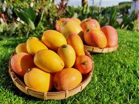 各式各樣的芒果