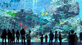 北台灣最美水族館桃園「Xpark」夏天開幕。(圖/業者提供)