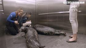 走入美國最大的水族館《喬治亞水族館》,一探水族館工作秘辛及溫馨故事,從訓練海豹坐電梯,到幫人氣企鵝輸血,看保育員與動物們的親蜜互動。(圖/動物星球頻道提供)
