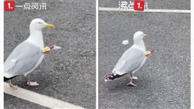 英國,海鷗,箭,受傷(圖/翻攝自沸點視頻)