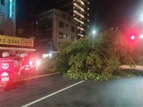 ▲台北市松山區一巨大路樹突然倒下,就壓在一旁轎車引擎蓋上。(圖/翻攝畫面)
