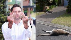 惡男駕車輾斃21袋鼠 有2隻剛出生 澳洲,袋鼠,圖拉海灘,屠殺,Ashley Sorenson 翻攝自推特