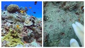 綠島石朗潛點小丑島的珊瑚、海葵近日因南寮漁港工程施工,被飄散的泥沙覆蓋,幾乎死亡。小丑魚。海洋生態。(圖/當地潛水教練Oscar提供)