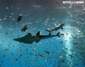 「Xpark 水族館」巨型水族箱可以看到壯觀的迴游魚群與鯊魚等海洋生物。(記者邱榮吉/攝影)