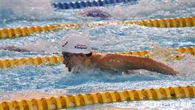 東奧模擬賽,游泳,王冠閎。(圖/記者劉家維攝影)