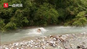 四川,熊貓,落水,保育員(圖/翻攝自沸點視頻)