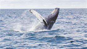 16:9 座頭鯨 鯨魚 圖/翻攝自pixabay https://pixabay.com/images/id-1209297/