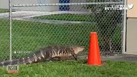 鱷魚想上學1600