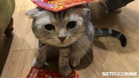 貓、尾巴、貓咪、小貓、寵物、動物(圖/IG mimi_catlife授權使用)