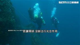生物慘遭奪命! 漁網覆蓋珊瑚礁 潛水員淨海:「清不完」
