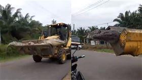 超大鱷魚500公斤橫空出世 被鄉民視為惡魔慘遭斬首(圖/翻攝自推特)