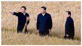 中國現糧食危機!小麥產量減近千萬噸 習近平急壞下令節約,圖/人民日報微博