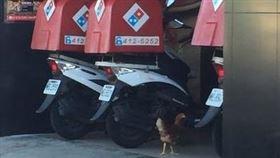 母雞在披薩店門口徘徊3分鐘,牠到底想幹嘛?(圖/翻攝自PTT)