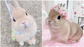 lily,兔子,(圖/IG:gracelily0703 授權提供)