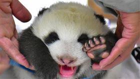 動物園志工即日起至8月28日止開放報名。(圖/臺北市立動物園提供)