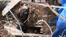 中國,貴州,土石流,小狗,受困(圖/翻攝自沸點視頻微博)