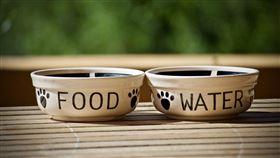 ▲毛小孩,飼料,碗,餐具,飲食,飲水,狗碗,貓碗,狗,貓。(示意圖/翻攝自Pixabay)