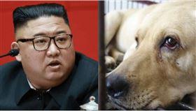 金正恩7月已下令養寵物已違反國家法律,並譴責養寵物是「遭到資本主義思想污染的趨勢,屬於資本主義的要素」(組合圖/資料照)