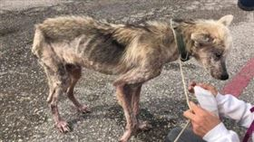 芬恩被救援團隊發現時,瘦到剩下骨頭。(圖/翻攝自Pet Angels Rescue臉書)