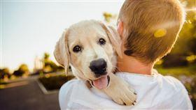 狗 毛孩 毛小孩 寵物 動物 (圖/翻攝自Pixabay)