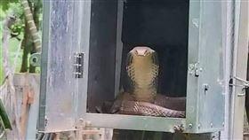 爆廢公社,眼鏡蛇,變電箱,蛇毒