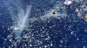 ▲美國海岸防衛隊向鯊魚開槍。(圖/翻攝自推特)