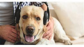 現代人豢養寵物的比例越來越高,如果能和他們一起在家享受一段美好的聽音樂時光,也是件美事,英國的Classic FM就整理出了12首適合毛小孩聽的古典樂,大家有空不妨試試。