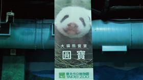 貓熊(圖/臺北市立動物園提供)
