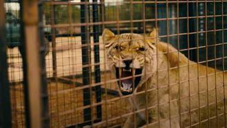 非法人工養殖獅獸性不減 主人竟遭…