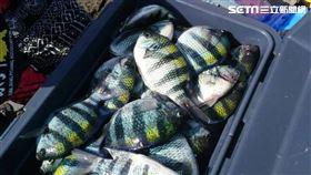 旅遊尋味/東北角漁村隱藏版美味 想吃厚殼魚自己動手釣(圖/新北市農業局)