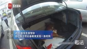 中國,江蘇,狗,狗屍,車廂,清潔員(圖/翻攝自荔枝視頻)