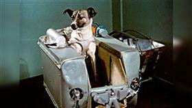 萊卡Laika 太空犬