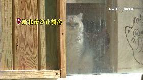 貓舍欠女薪1800