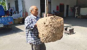 布農族獵人吉呀努已摘15個虎頭蜂窩