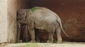 卡萬(圖/翻攝自Free Kaavan the Elephant臉書)