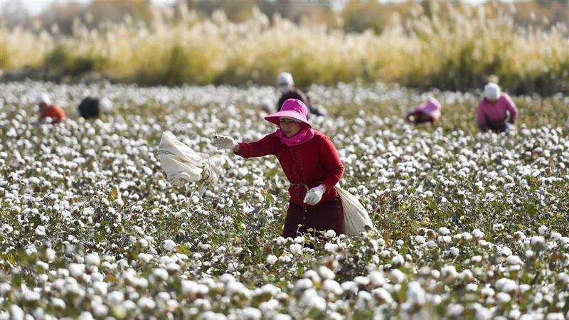 忧维吾尔人权问题 日企郡是拟停用新疆棉