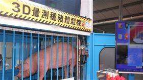 3D自動量測種豬體型機啟用行政院農業委員會畜產試驗所與工業技術研究院合作開發的3D自動量測種豬體型機9日啟用,種豬進入量測空間後15秒就能完成多項體型性狀量測。中央社記者楊思瑞攝  109年9月9日