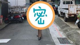 日本女星武田玲奈(圖/翻攝自rena_takeda IG)