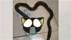 馬來西亞,眼鏡蛇,吵架,姪子,男友(圖/翻攝自推特)