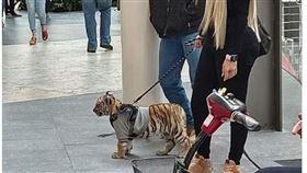 金髮正妹牽老虎逛大街。(圖/翻攝自Zaira M.推特)