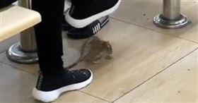 顧客到咖啡廳用餐時,發現腳下有老鼠亂竄。(圖/翻攝自新明日報)